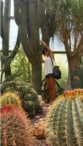 La Cutura piante grasse