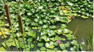 Laghetto orto botanico del Salento