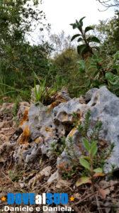 Piante e rocce