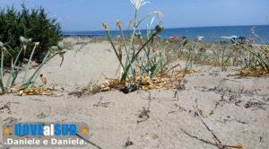 Duna sabbiosa di Castellaneta Marina spiaggia