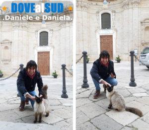 Copertino centro storico, amico gatto