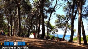Pineta baia di Porto Selvaggio